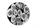 Nano Kobalt